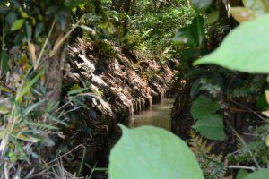 神服織機殿神社(皇大神宮所管社)へ流れ込む水路