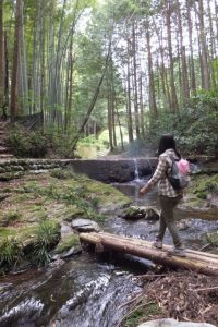 眼鏡橋の遠望(熊野古道伊勢路)