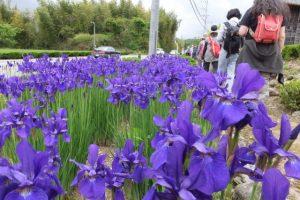 熊野古道「←JR川添駅(約2.5Km)・JR栃原駅(約35Km)→」の道標付近