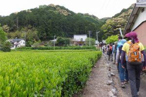 宝泉寺への参道(大台町下楠)