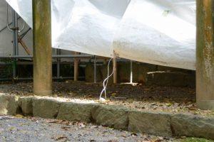 神風(?)に裾が吹き上げられる工事用シート(修繕作業中の朽羅神社)
