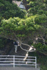 神宮御料鰒調製所の階段を上る男性