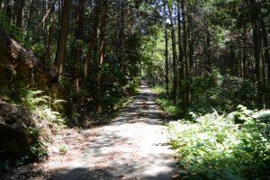 国道42号から湿地帯を目指して林道を
