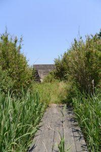 湿地帯を抜けて粟皇子神社(皇大神宮 摂社)へ
