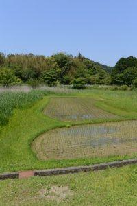 松下川に点在する個性豊かな形状の田んぼ(二見町松下)