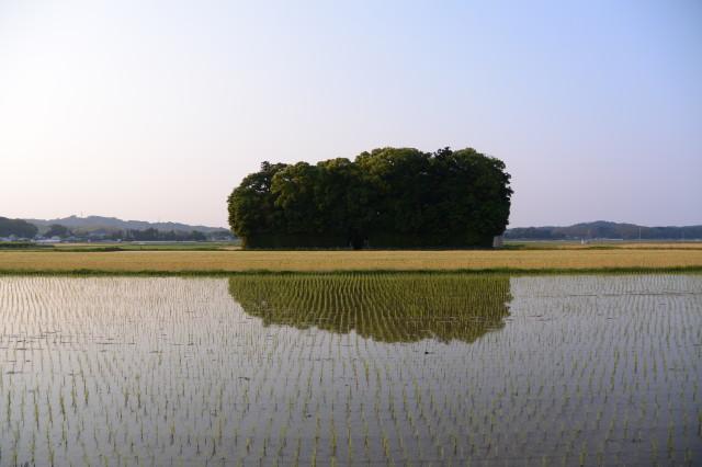 朽羅神社(皇大神宮 摂社)の社叢