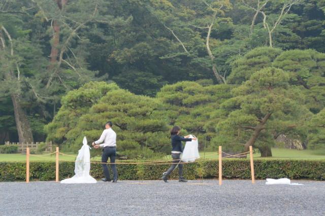 伊勢志摩サミット記念植樹の「神宮スギ」(内宮)