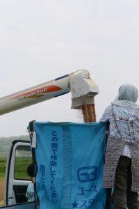 麦秋を刈る(多気郡多気町笠木)