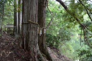 「瀧原宮周辺の神々」④弁財天付近も立つ夫婦木
