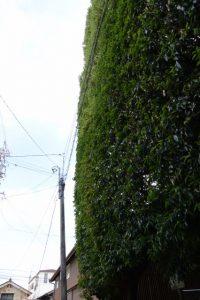 垂直に刈り込まれた清野井庭神社の社叢