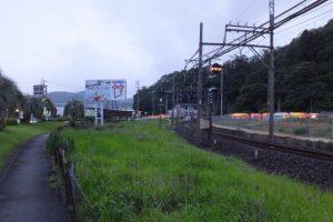 赤崎神社の社叢遠望