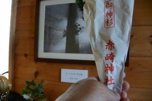 新しい赤崎神社の御神杉