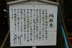 坂銀杏の説明板(坂社)