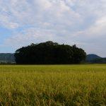 たわわに実る稲に囲まれた朽羅神社(皇大神宮 摂社)