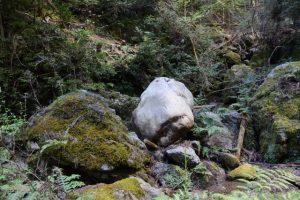 苔むす中の白い石(滝頭不動滝〜奥伊勢フォレストピア)