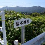 堀割橋(五十鈴川)の右岸側にある「桜木森社」案内板