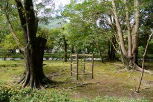 戻ってきた伊勢志摩サミットでの記念植樹「神宮スギ」苗木はこちら?(内宮)