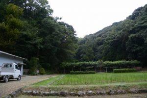 御料田(猿田彦神社)