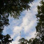 須原大社の境内から見上げた空(伊勢市一之木)