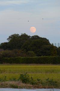 自宅近くの河原神社(豊受大神宮 摂社)から昇る月