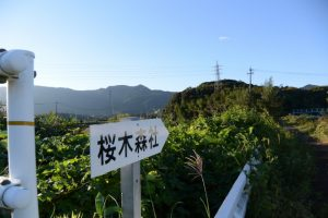 堀割橋(五十鈴川)付近から望む桜木森社方向
