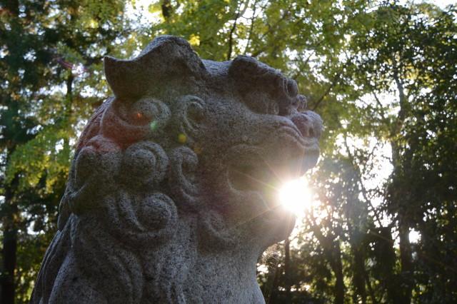 朝日に吠える狛犬、坂社(伊勢市八日市場町)