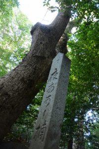 くずし字を勉強するきっかけのひとつ、夜あ可し楠(河邊七種神社)