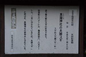 夫婦スギの説明板(黒瀧神社)