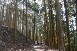 伊勢南街道(小峠〜杉谷登山口)