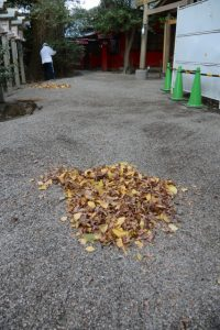 全ての葉を落としたイチョウ、須原大社(伊勢市一之木)