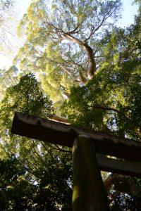 宇須乃野神社(豊受大神宮 摂社)の鳥居とクスノキ
