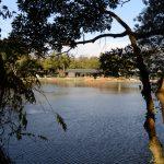 茜社の参道から望む勾玉池
