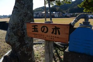 玉の木(南牟婁郡紀宝町神内)