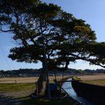 玉の木と神内川(南牟婁郡紀宝町神内)