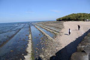 青島の周囲にある鬼の洗濯板(青島の隆起海床と奇形波蝕痕、波状岩)