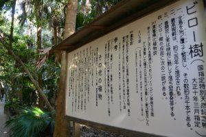 ビロー樹の説明板(青島神社)