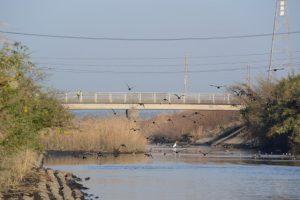 唐仁第4樋管付近から望む塩入川の上流側、弁天橋方向