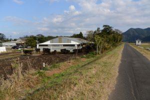 唐仁樋管(肝属川)付近の牛舎