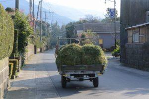 牧草を運ぶ車(鹿児島県肝属郡東串良町新川西)