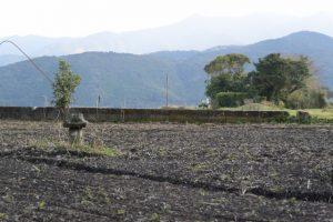 畑の中に建つ石祠と史跡唐仁古墳群 第123号墳