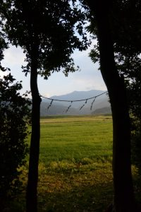 水神さんの杜からの風景(鹿児島県肝属郡東串良町新川西)