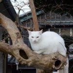 木の上から見つめるネコ(伊勢市河崎)