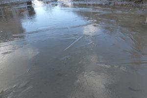 汁谷川の散策で見つけた水溜りの氷