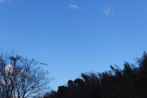 汁谷川の畔で空を見上げて