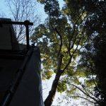 御造替中の小俣神社(豊受大神宮 摂社)