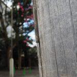 修繕後に修繕も必要な鳥居の柱(須原大社)