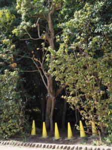 作業道の入口、蚊野神社(皇大神宮 摂社)