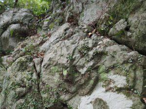 北御門参道の火除橋付近での珍石「猿面石」探し(外宮)