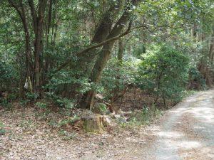 鴨神社(皇大神宮 摂社)への参道で見かけた注連縄付近