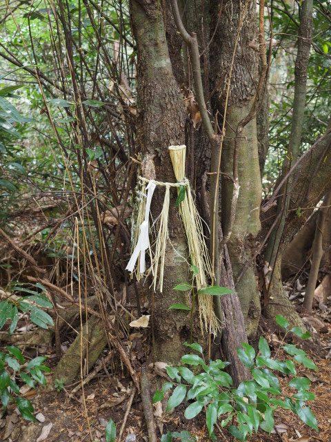 鴨神社(皇大神宮 摂社)への参道で見かけた注連縄